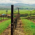 Livermore Valley: California's Other Wine Country