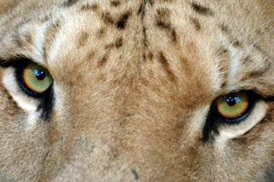 Touching Tigers: A Once-in-a-Lifetime Safari Experience in South Carolina