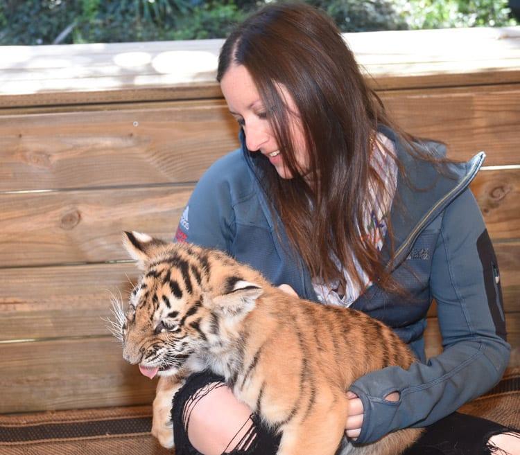 Tiger Cubs At Myrtle Beach Safari In South Carolina