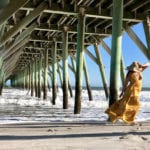 How to Have the Ultimate Adult Spring Break in Myrtle Beach