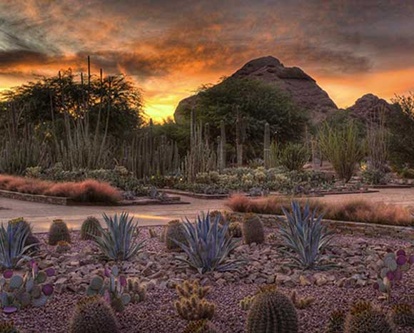 5 Unique Things to do in Phoenix this Winter
